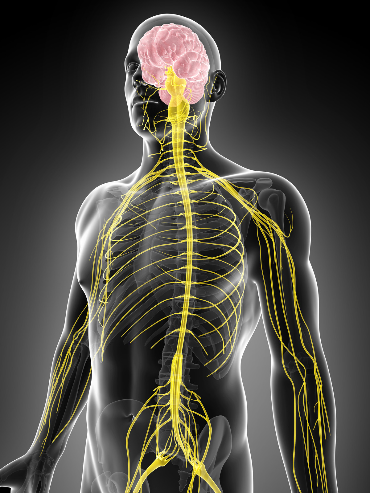 L'intelligence innée: votre étincelle de vie et la chiropratique